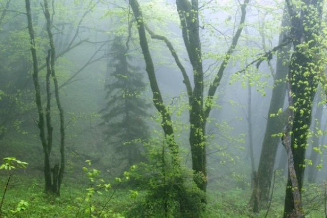 Mtirala NP, Georgia: Credit: Agency of Protected Areas