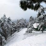 Winter in Borjomi-Kharagauli National Park, Georgia