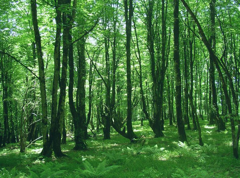 Hirkan NP © Ministry of Ecology and Natural Resources, Azerbaijan