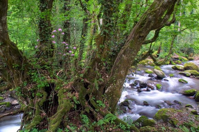 Mtirala National Park © APA, Georgia