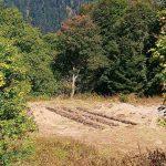 Borjomi-Kharagauli National Park First Work for the Shuano Tourist Shelter