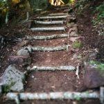 Borjomi-Kharagauli National Park Trail Uphill