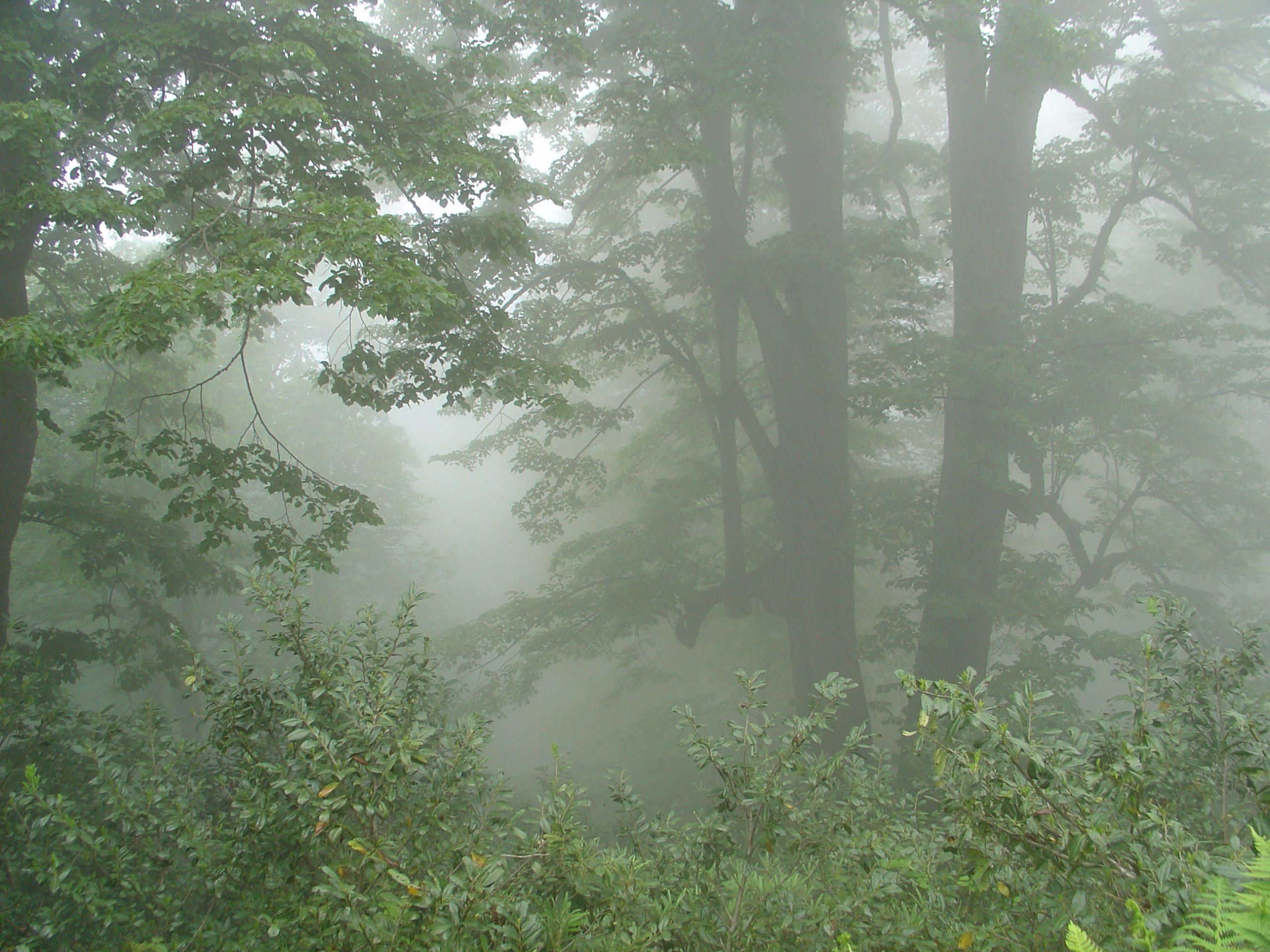 Mtirala National Park. Colchic broad-leaved mixed forest. 06/2004 Photographer & Copyright: Zurab Manvelidze